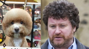 dog that looks like rory mcgrath